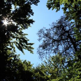 Hvězda mezi stromy