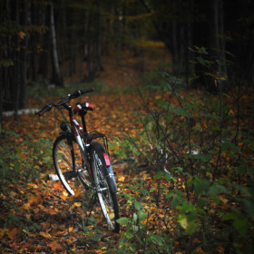 Ztraceno v lese