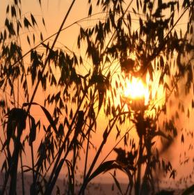 západ slunce v obilí