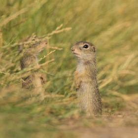 Hej brácho, poď sa odfotiť tiež a neskrývaj sa za trávou!