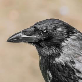 Pozdrav z ptačí říše