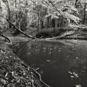 Lužní les XXVII - Přírodní rezervace Rezavka