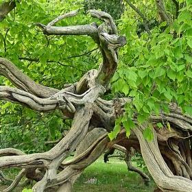 Větve místo kořenů