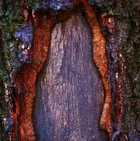 Odhalený strom