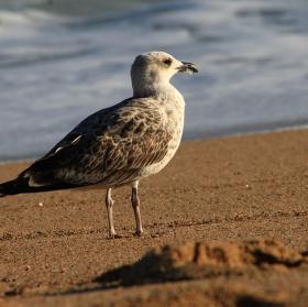 Oddychovka na pláži