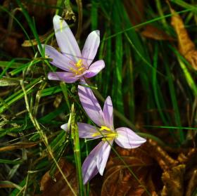Květy v podzimu
