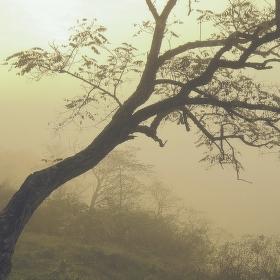 Mlhavá vyhlídka
