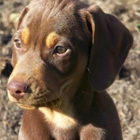 Portrét psíka