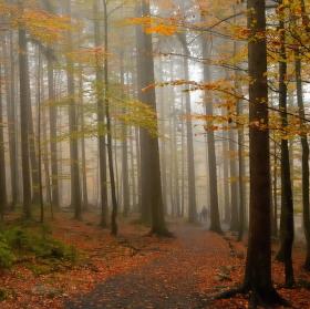 Les v podzimním hávu