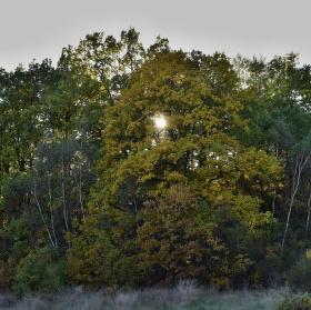 Když slunce je už nízko a mezi stromy se vkrádá šero...