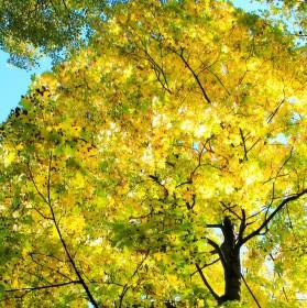 Podzimní balzám