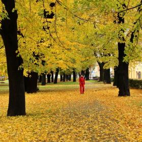 V zajetí podzimu