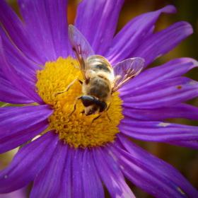 paní včelka :-)