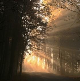 Ranní sluníčko v šumavském lese