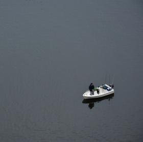 Rybář vltavský