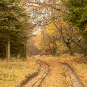Někde v lese