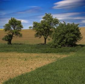 Štefanovské pole maľované