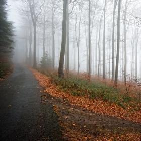 Křižovatka cestou na Javorník