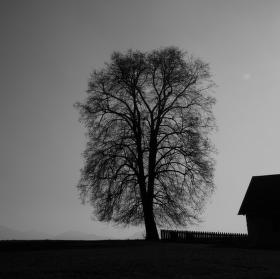 Postavit dům, zasadit strom ..