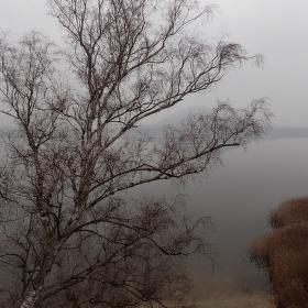 Vánoce na Máchově jezeře