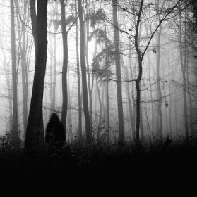 nebojím se do lesa