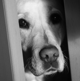 Můžu vstoupit?
