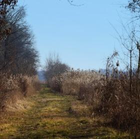 Cesta kolem rybníka