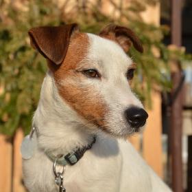 Mailou - psí modeling