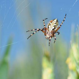 Pavouk číslo 2.