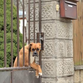 čekání na pošťáka