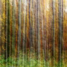 les ze snů