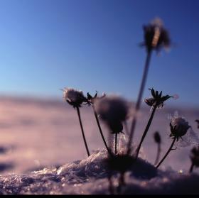 Pod kopou sněhových vloček