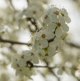 Pokračování jara :)