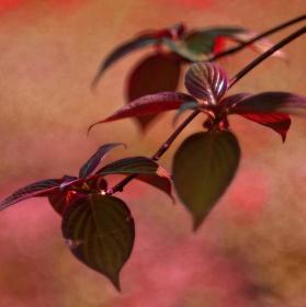 Jar v japonskej záhrade