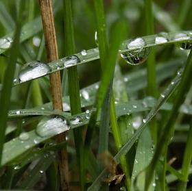 Kapky po Dešti