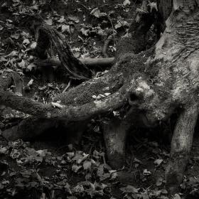 Lužní les XXXV - Přírodní rezervace Polanský les