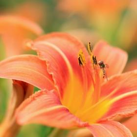 Vosička na květu