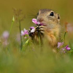 ...Óóóó,ta krásně voní...
