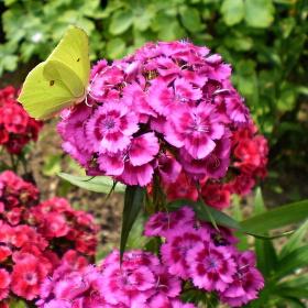 i s motýlem :-)