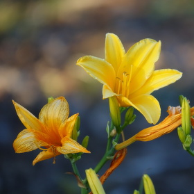 Všechny fáze květu