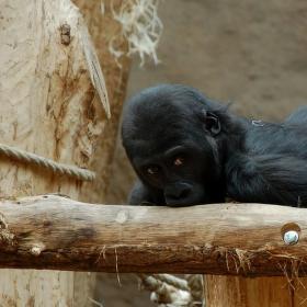Moja, nebo tvoja ? Opička zoo Praha