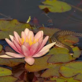 Zvědavý had :-)