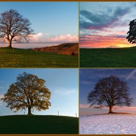 Příběh stromu
