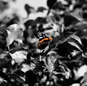 Motýlí list