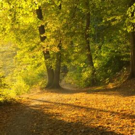 Ranní podzimní