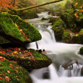 serpetiny Bučinského potoka