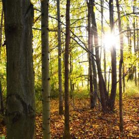 Podzim.. :)