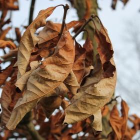 Zima v pražské Stromovce