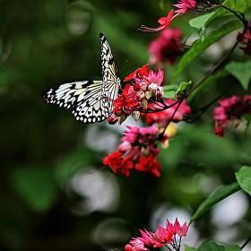 Motýlí půvab