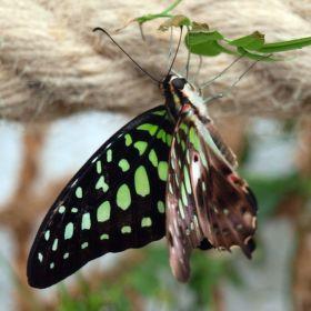 Motýlek 9